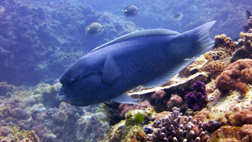 DAN destination blog Lord Howe Island an adventure playground for scuba divers
