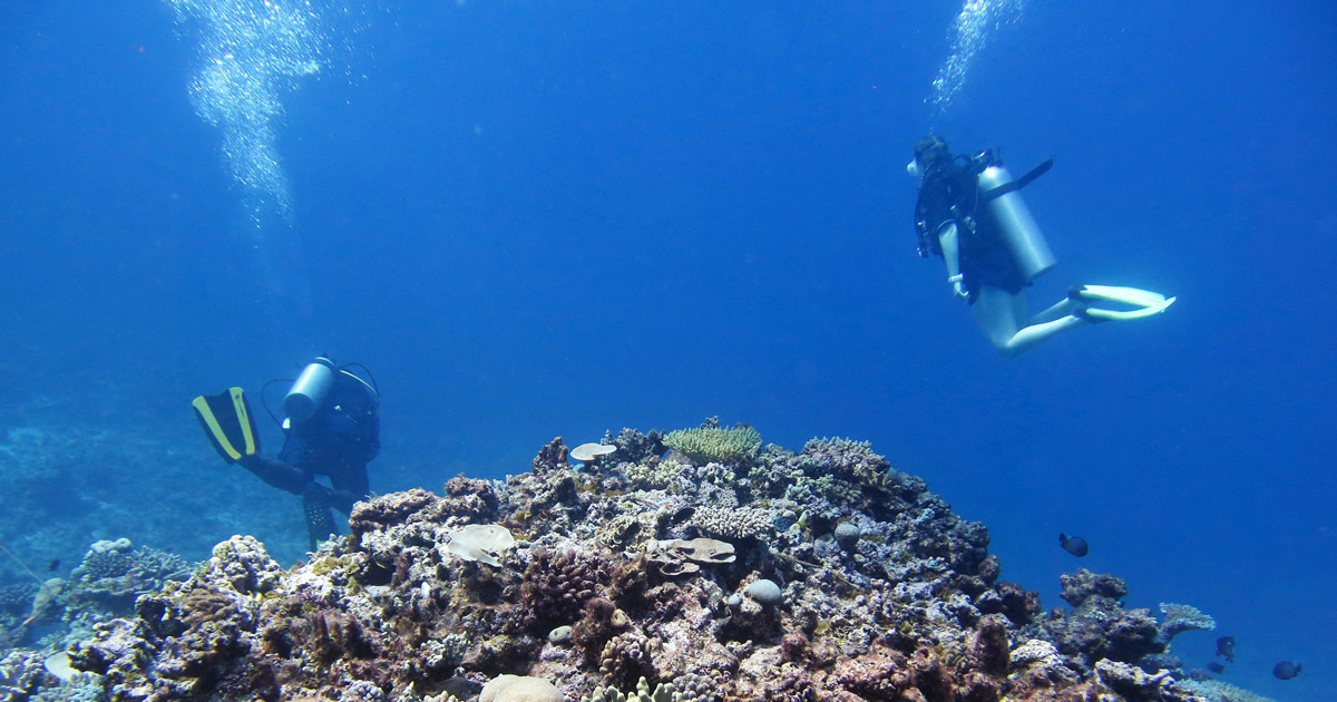 How you can save over $10,000 on your next Dive Trip