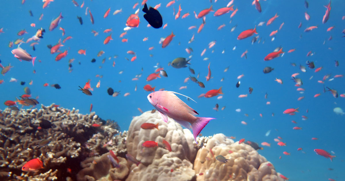 Diving Nusa Penida's colourful Crystal Bay – but beware the downcurrents