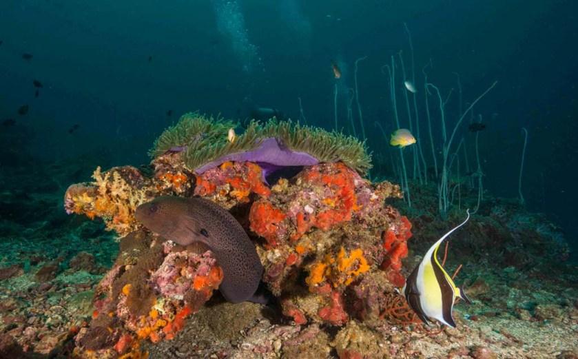 Koh Ha moray eel and anemone_12_18