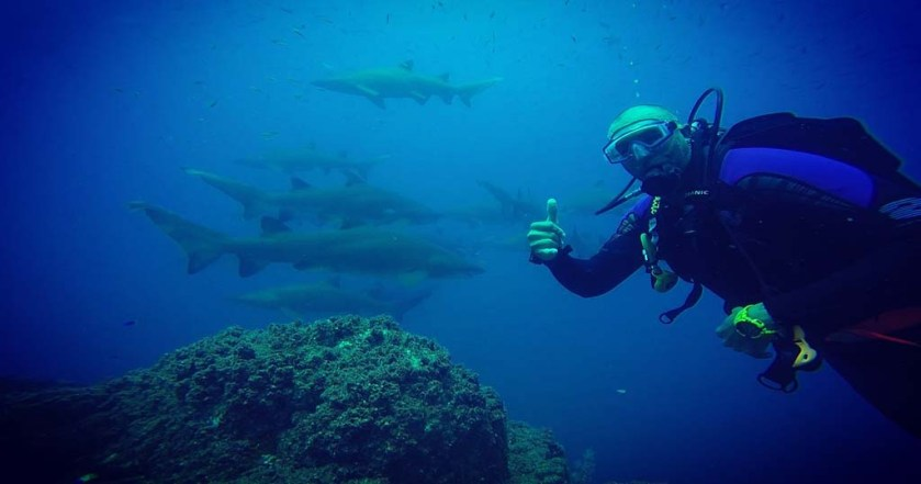 Wolf Rock diver with sharks