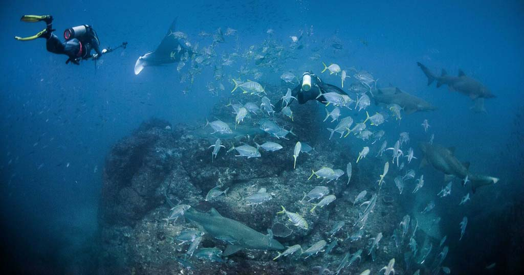 Wolf Rock, Australia's new favourite pelagic dive experience
